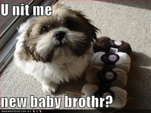 funny-dog-pictures-knit-baby-brother