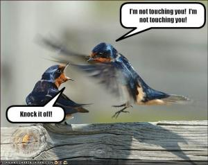 funny-pictures-sibling-hummingbirds-fight3